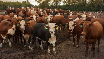 Variables incontrolables a menos de dos meses del nuevo recuento de stock ganadero: qué anticipa la tasa de extracción