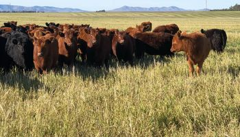 Zafra de terneros: referentes del mercado ganadero repasan los precios luego de un gran remate