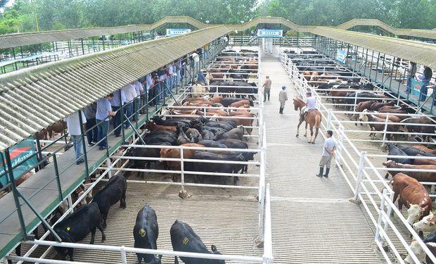 El acumulado de la semana fue de 22.674 animales contra 23.749 de la anterior.