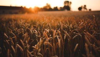 Mercado internacional de granos: Argentina retorna con fuerza