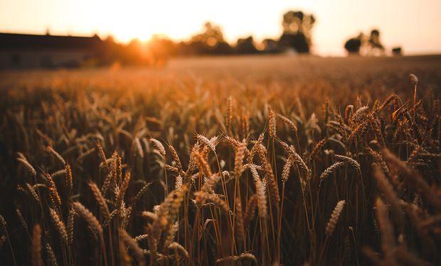 Egipto compró 120.000 toneladas de trigo argentino después de que los exportadores ofrecieron las mejores tarifas.