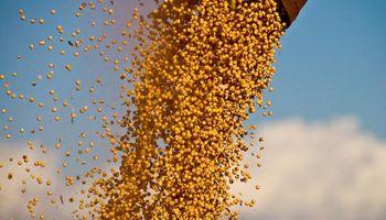 Saldo favorable para la soja local en mayo