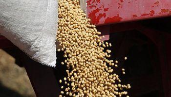 Se redujo la comercialización de soja