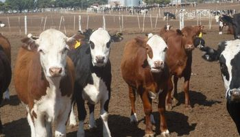 Retirada argentina del mercado mundial de carne