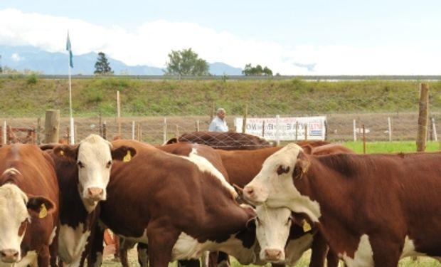"""""""Es una maravilla ver que cada vez hay más interés en el manejo de la hacienda sin estrés"""", manifestó Temple Grandin."""