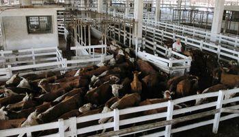 Bajas importantes en ambos mercados ganaderos