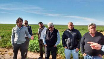 Se conformó la Cámara Argentina de la Alfalfa