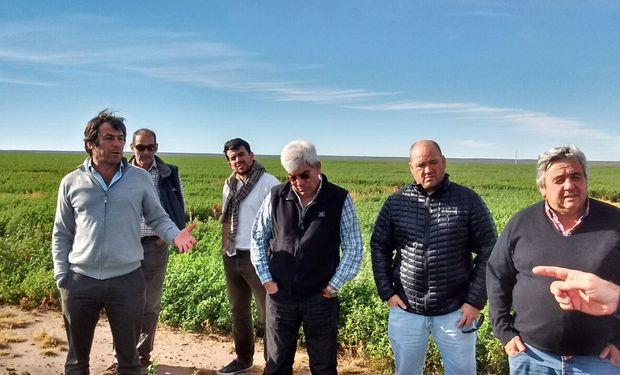 La Pampa: se conformó la Cámara Argentina de la Alfalfa.