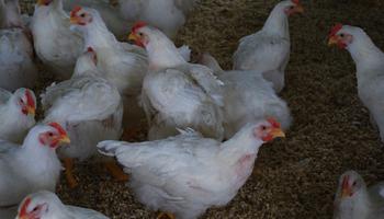 Agricultura se reunió con la mesa avícola