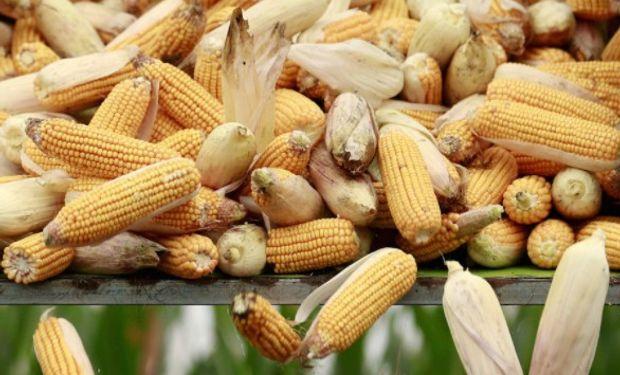 Estados Unidos y Canadá son actualmente los principales proveedores de granos y oleaginosas a México.