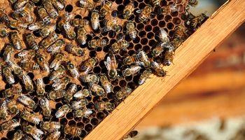 La calidad de la miel: de la flor a la mesa