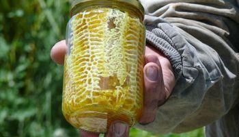 Miel orgánica envasada por las propias abejas, de Santa Fe al mundo