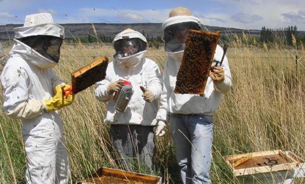 En enero pasado se declararon exportaciones argentinas de miel a granel por 5086 toneladas a un valor promedio ponderado de 2,03 u$s/kg.