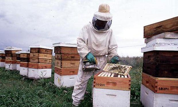 Siguen recuperándose los precios de la miel en línea con la depuración parcial de partidas chinas adulteradas.