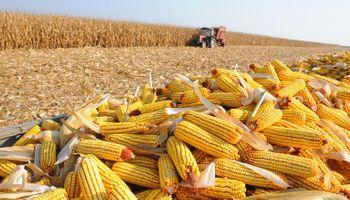 Avanza la safrinha de maíz en Brasil y estiman una cosecha por encima de los 73 millones de toneladas