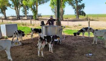 E-milk: buscan impulsar la producción de novedoso distribuidor de leche industria nacional