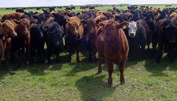 La ganadería necesita de incentivos