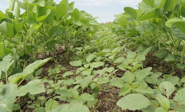 Herbicidas pre emergentes inteligentes: una nueva generación que desde el tanque de la pulverizadora se muestra diferente
