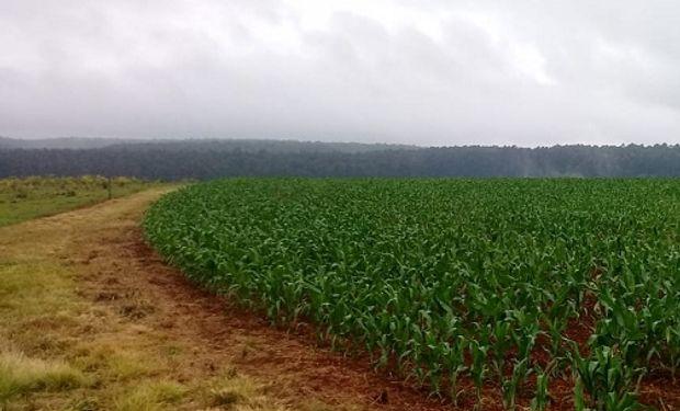 Una iniciativa de Agroindustria y Maizar coordinada técnicamente por CREA.