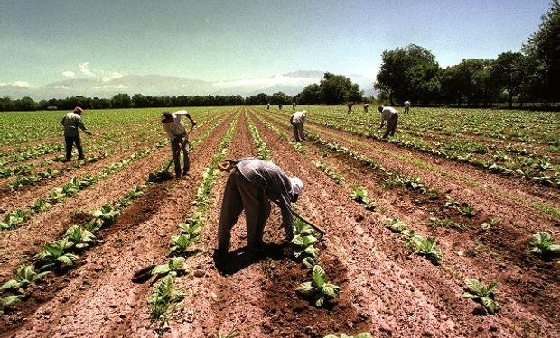 Trabajadores rurales: las cuatro modalidades contractuales en el Régimen de Trabajo Agrario