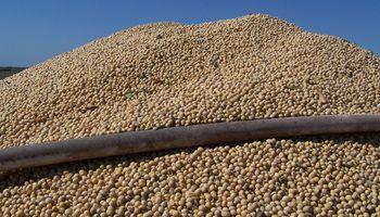 Córdoba: récord para la molienda de oleaginosas