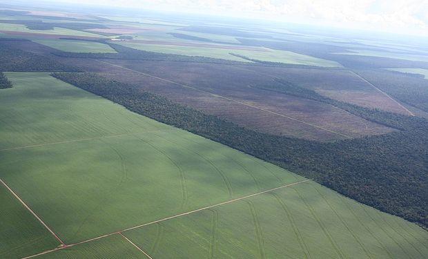 Clásico: soja y Brasil presionan con sus vaivenes la economía