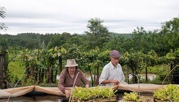 Actualización de datos del Monotributo Social Agropecuario