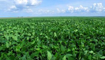 """Monsanto pide """"un marco"""" para el control en semillas, pero no necesariamente una ley"""