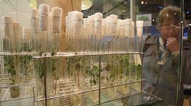La acción de Bioceres Crop Solutions se dispara en Nueva York por una adquisición ligada a proteínas alternativas