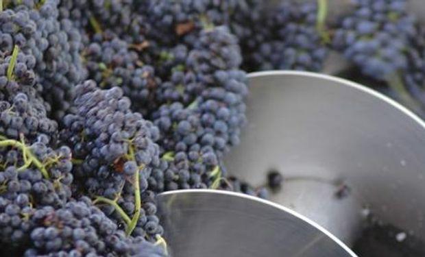 Cayeron las expectativas de empresas vitivinícolas de aumentar o concretar nuevos negocios