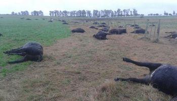 Acumulación de nitritos en verdeos mata ganados