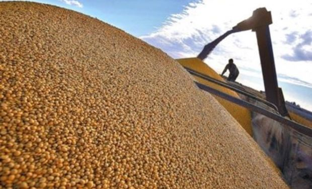 La Bolsa de Cereales de Córdoba compartió la estimación final de arrendamientos agrícolas para la campaña 2019/20.