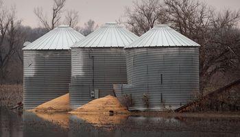 El maíz, cerca de un máximo de 2 años por las intensas lluvias en Estados Unidos