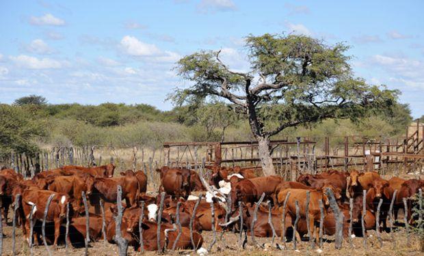 Detectan una nueva cepa de la fiebre aftosa que afecta a miles de cabezas de ganado