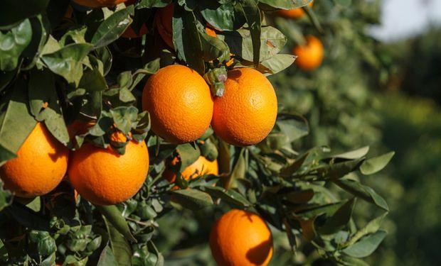 En el caso de la naranja el precio se multiplicó por 10,15 veces desde que salió del campo.