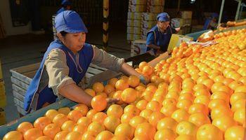 Un ingenio produce frutas y jugos como alternativa