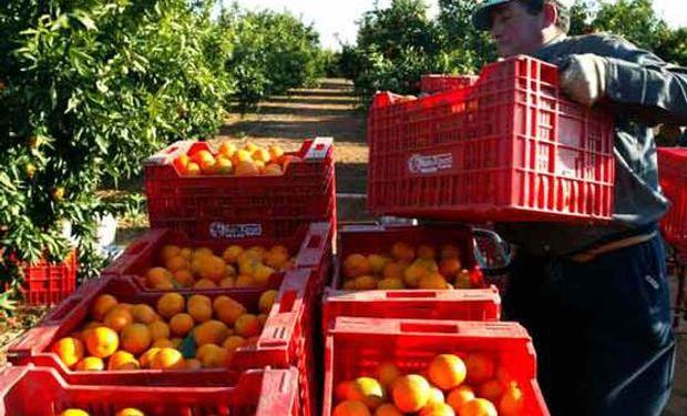 Desde que sale del campo, el precio de la naranja se multipica por 8,1 veces hasta llegar a la góndola