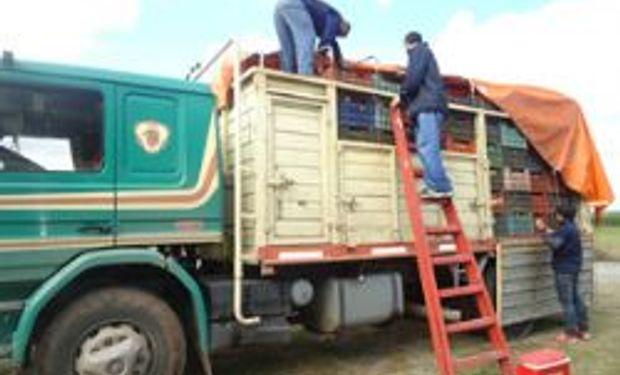 "Senasa decomisó 4,3 toneladas de frutas en ""El Naranjo"", Salta"