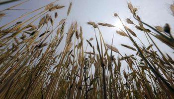 """""""Brexit"""" impactará en el negocio agrícola en el mediano plazo"""