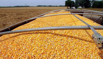 """El año próximo """"va a ser mas negocio producir maíz que soja"""""""