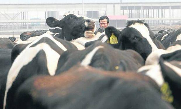Ordeñará 16.000 vacas por día y apuesta a crecer.
