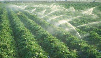 En Neuquén darán mayor impulso a la agroindustria