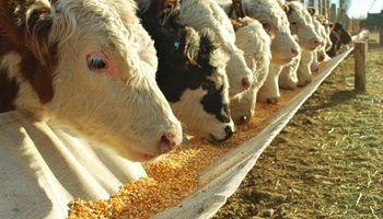 Las empresas de nutrición animal se reúnen para hablar sobre su futuro