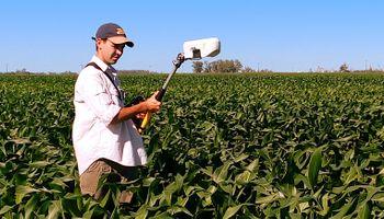 El maíz tardío es 19% menos eficiente que el temprano en el uso del nitrógeno