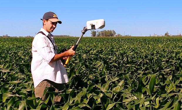 Un estudio académico de la UBA y el INTA Paraná busca ajustar la nutrición del maíz tardío.