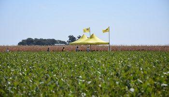 En Santa Fe, los sojeros buscan plasticidad en los ciclos más cortos