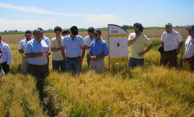 Sebastián Acuña, del programa de mejoramiento de cebada de Nidera, destacó el avance genético de la variedad Explorer en lo que hace a r
