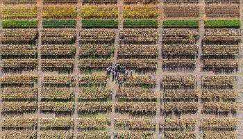 Hay formas de disminuir el impacto del estrés hídrico en maíz