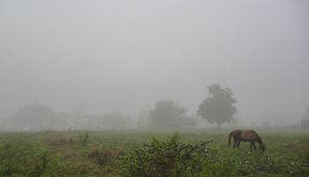 Reportes de importantes coberturas de niebla