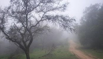 Nieblas y lloviznas por sectores